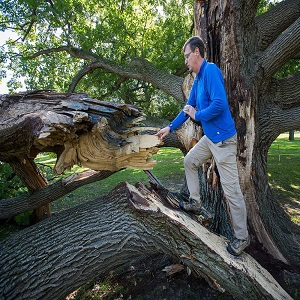 How Does An Arborist Make The Tree Hazard Assessment Reports?