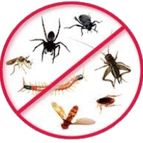 Why You Need To Contact Pest Control If You Have A Termite Infestation At Home: